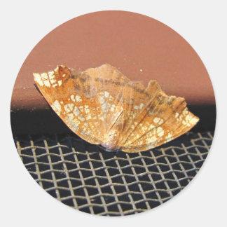 Rusty Moth ~ sticker