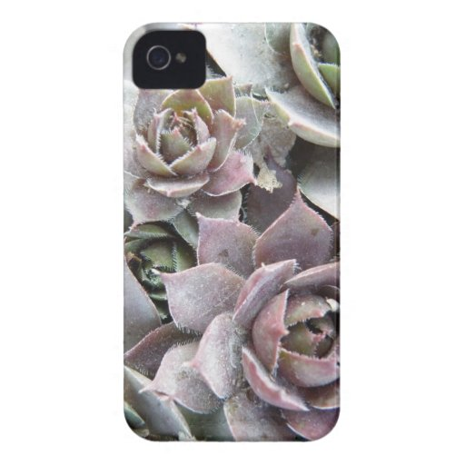 Rusty Roses iPhone 4 Case