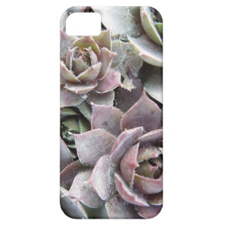 Rusty Roses iPhone 5 Cover