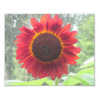 Rusty Sunflower Photo Print