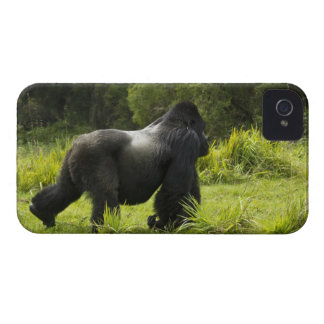 Rwanda, Volcanoes National Park. Mountain 2 iPhone 4 Cover