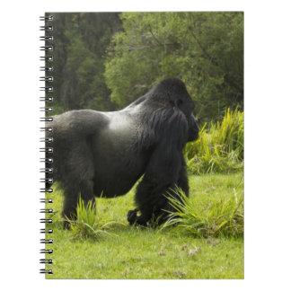 Rwanda, Volcanoes National Park. Mountain 2 Notebook