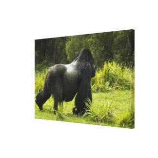 Rwanda, Volcanoes National Park. Mountain 2 Stretched Canvas Prints