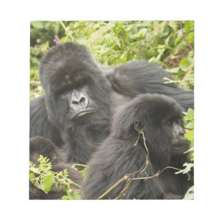 Rwanda, Volcanoes National Park. Mountain Notepad