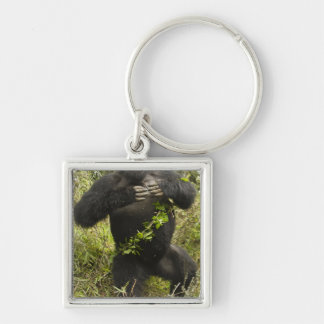Rwanda, Volcanoes National Park. Mountain Silver-Colored Square Key Ring