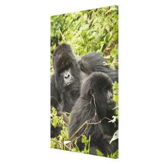 Rwanda, Volcanoes National Park. Mountain Stretched Canvas Prints