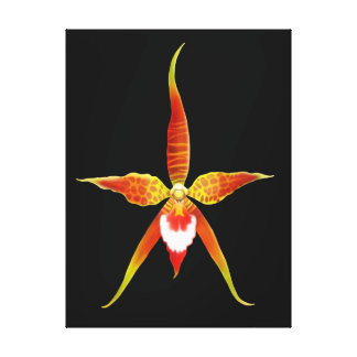 Rynchostele Orchid Flower Wrapped Canvas Canvas Print