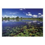 S.A., Brazil, Waterways in Pantanal Art Photo
