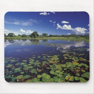 S.A., Brazil, Waterways in Pantanal Mouse Mat