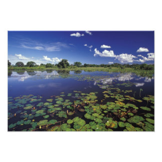 S.A., Brazil, Waterways in Pantanal Photo Print
