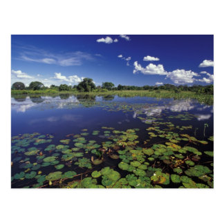 S.A., Brazil, Waterways in Pantanal Postcard