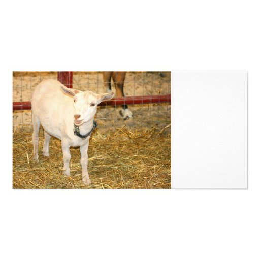 Saanen doeling goat mouth open photo card template
