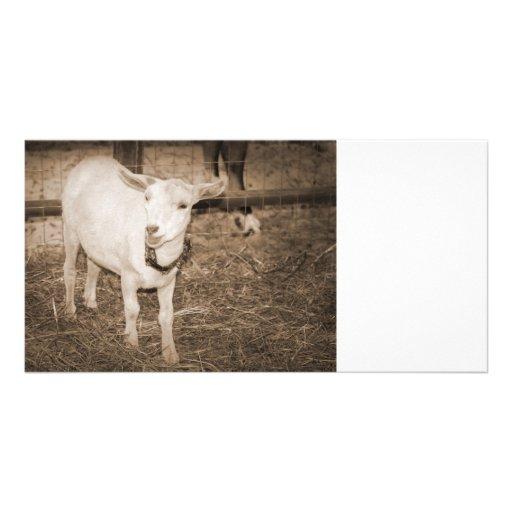 Saanen doeling sepia goat mouth open custom photo card