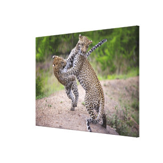 Sabi Sands Conservancy, Mpumalanga Province, 2 Canvas Print
