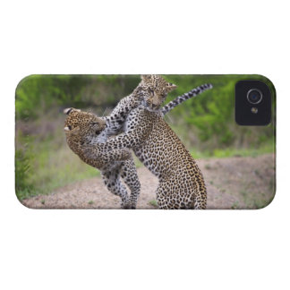 Sabi Sands Conservancy, Mpumalanga Province, iPhone 4 Cover