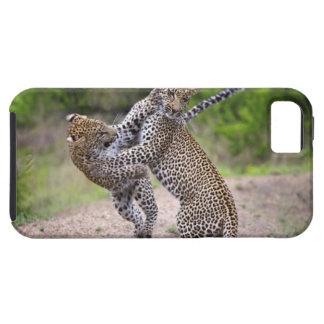 Sabi Sands Conservancy, Mpumalanga Province, iPhone 5 Covers