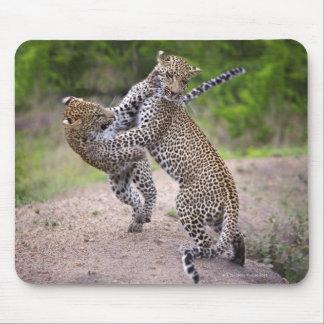 Sabi Sands Conservancy, Mpumalanga Province, Mouse Mat