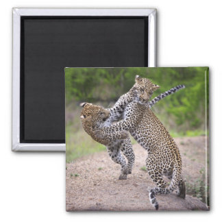 Sabi Sands Conservancy, Mpumalanga Province, Square Magnet