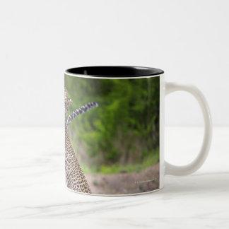 Sabi Sands Conservancy, Mpumalanga Province, Two-Tone Coffee Mug