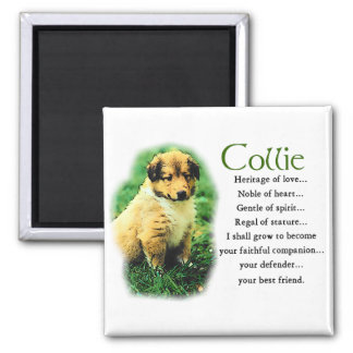 Sable Collie Gifts Magnets