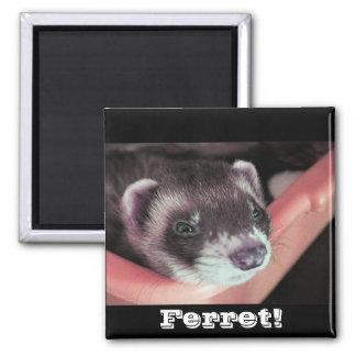 Sable Ferret Magnet