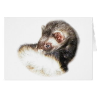 Sable Ferret Picture Note Card