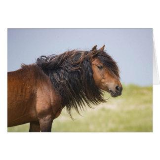 Sable Island Stallion - Wild Horse Greting Card