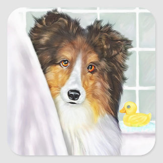 Sable Sheltie Bath Square Sticker