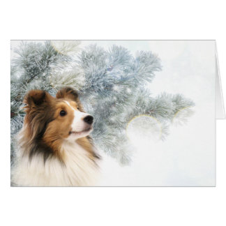 Sable Sheltie Christmas Card