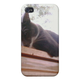 Sacha the cat sleeping cases for iPhone 4