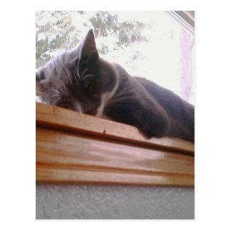 Sacha the cat sleeping post cards