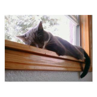 Sacha the cat sleeping postcard