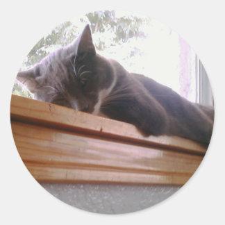Sacha the cat sleeping round sticker