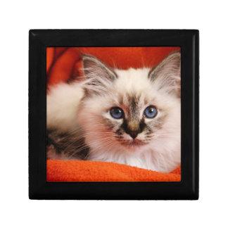 Sacred cat of Burma (Sacred Birman kitten) Gift Box