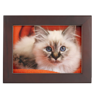 Sacred cat of Burma (Sacred Birman kitten) Keepsake Box