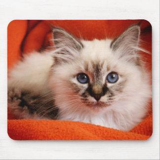Sacred cat of Burma (Sacred Birman kitten) Mouse Pad
