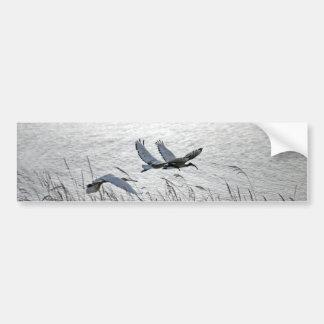 Sacred ibises in flight bumper stickers