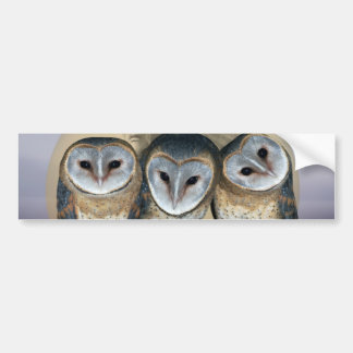 Sacred owls bumper stickers