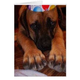 Sad English Mastiff Wearing Birthday Party Hat Card