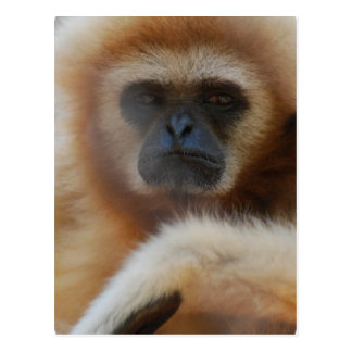 Sad Gibbon Postcard