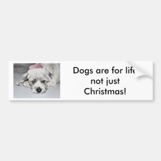 Sad little christmas dog bumper sticker