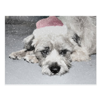 Sad little christmas dog postcard