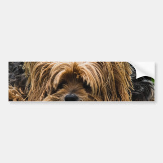 Sad Little Yorkie Bumper Sticker