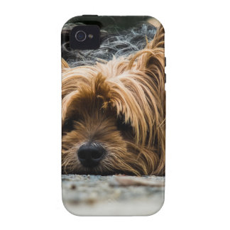 Sad Little Yorkie iPhone 4/4S Case