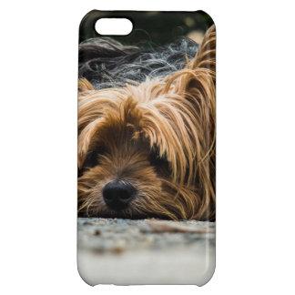 Sad Little Yorkie iPhone 5C Cases