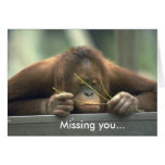 Sad Orangutan Missing You Greeting Cards