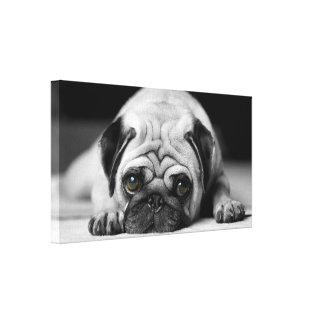 Sad Pug Canvas Prints