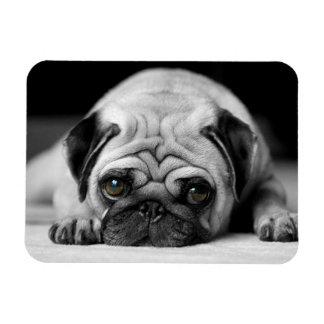 Sad Pug Magnet