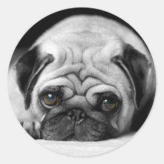 Sad Pug Round Sticker