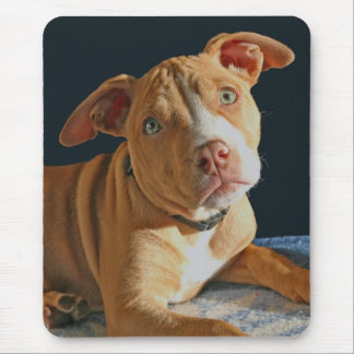 Sad Puppy Pit Bull Dog Doggy Mousepad